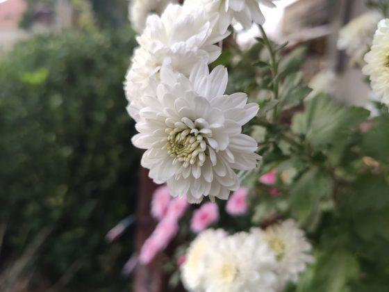 Xiaomi Mi 9T Pro przykładowe zdjęcia